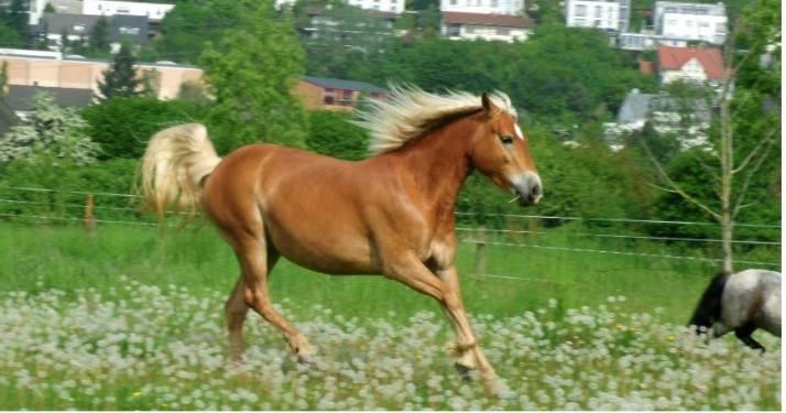 Urlaub vom Pferd