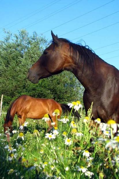 Ein Pferd mit vielen Namen
