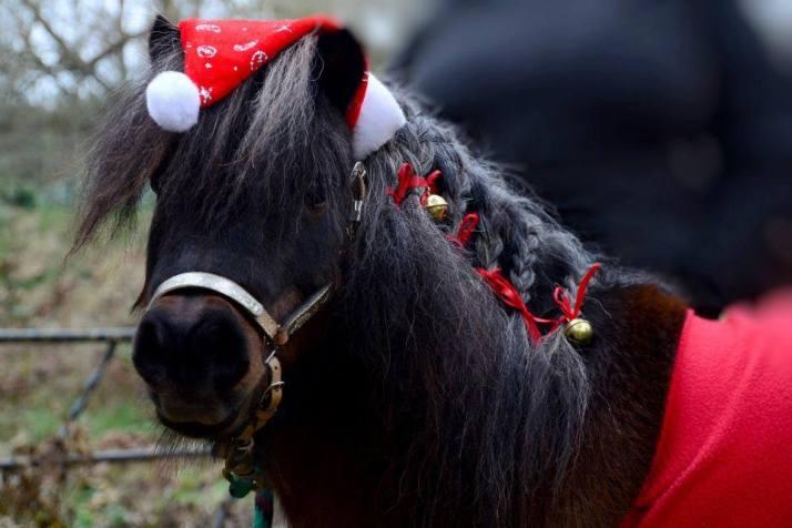 weihnachtspferd