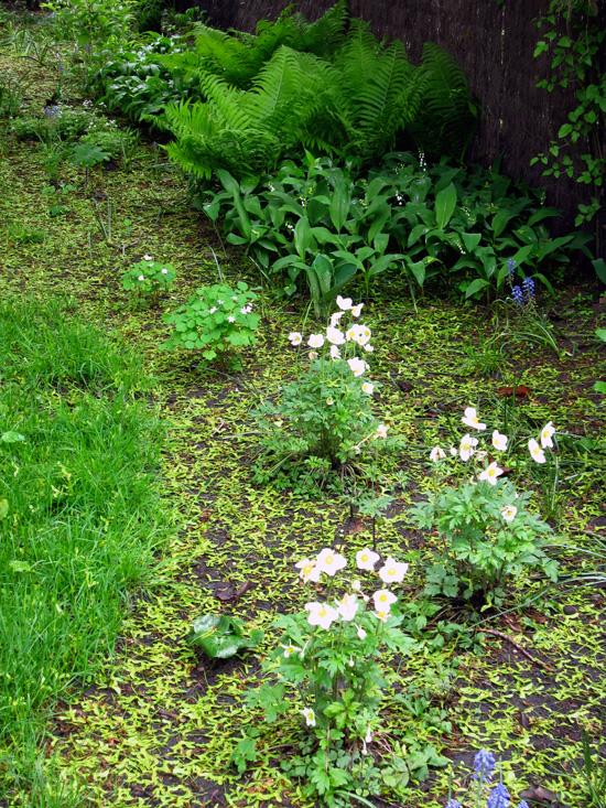 Shade plants, © 2014 Celia Her City