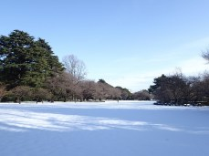 I love the wide open spaces at Shinjuku Gyoen