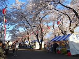 Fussa Sakura Festival