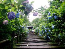 Hydrangea stairway