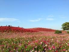 Hitachi Hillside Park