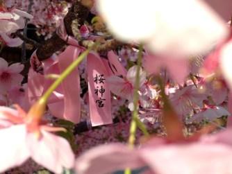 Sakura Jingu Shrine