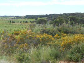 garrigue heath land