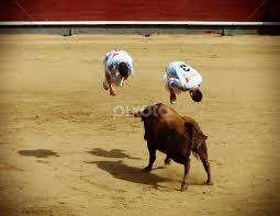 bull somersault