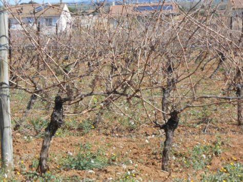 Vine Report 2014