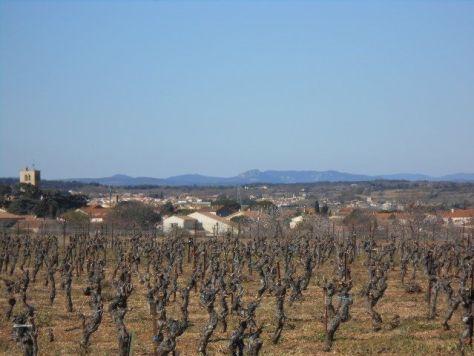 Languedoc spring