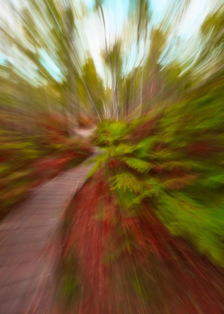 L'escalier en forêt de Fontainebleau en icm