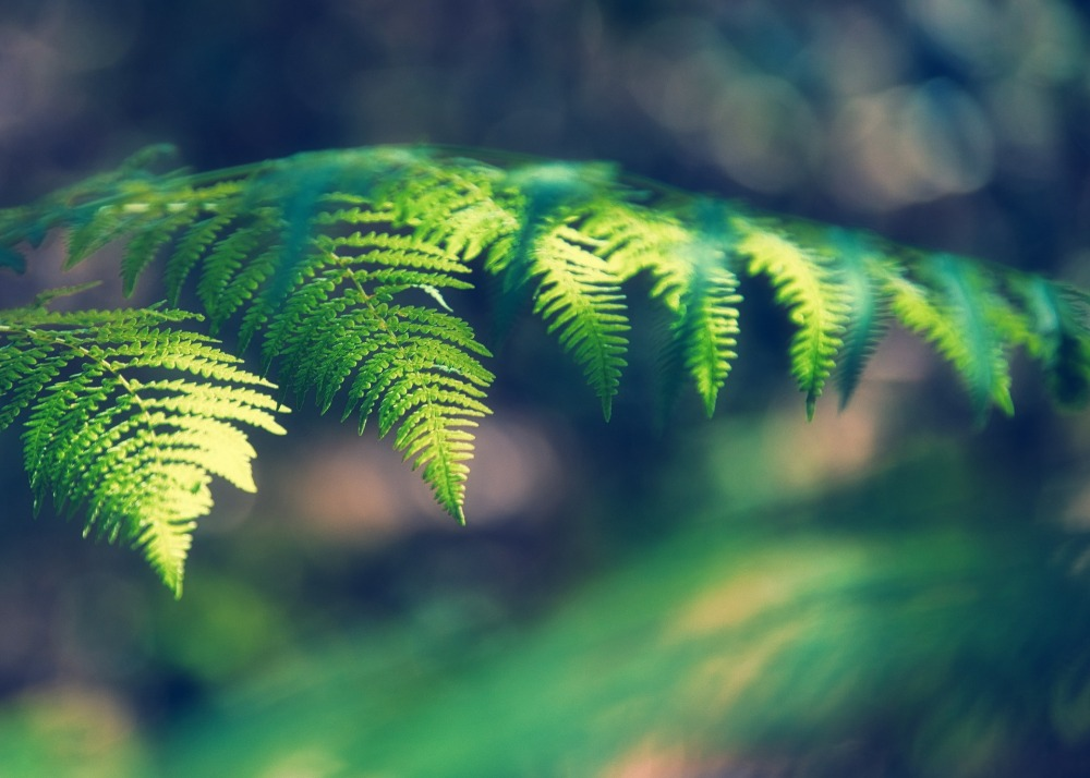 Feuille de fougères en été dans une nature verte