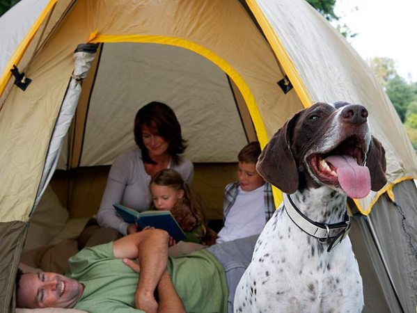 200292753-001-banfield-camping-with-dog-tips-632x475