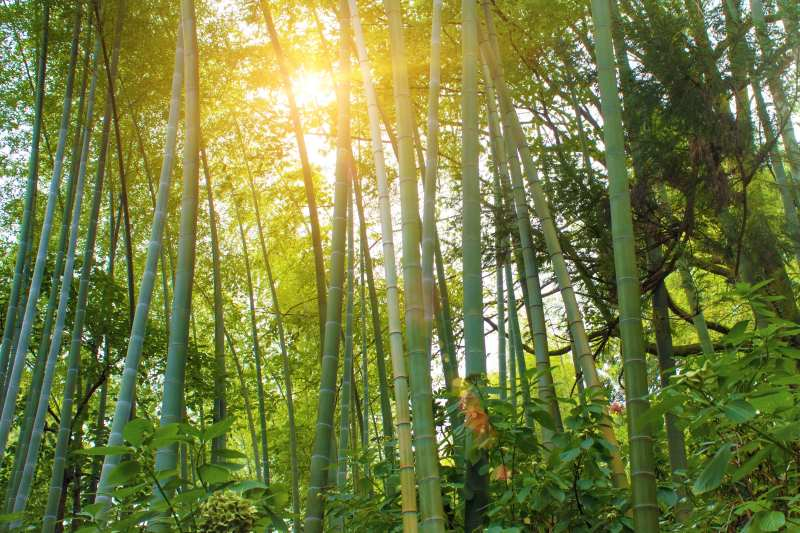 5 Exceptionnal Caracteristics Of Bamboo