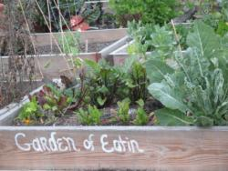 Community Gardens   Los Angeles County Photo Comm Garden Web Versi