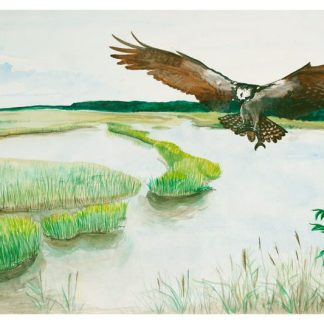 Great Salt Marsh II Osprey ©CEMarqua