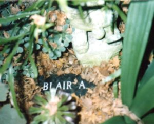 Blair had a stone carved with his name to be placed in the backyard after his death. He had no other grave.