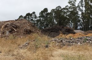 Creepy Mulch Piles