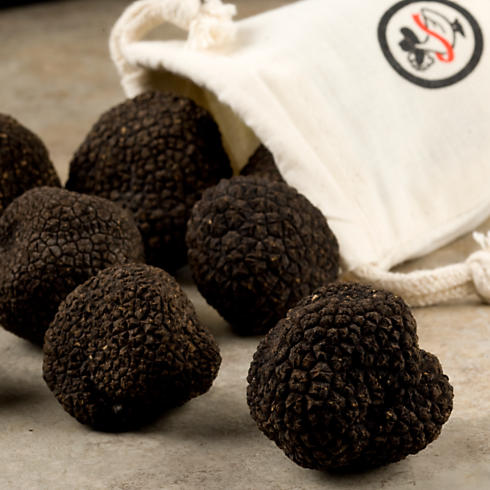Tuber melanosporum, the black winter truffle