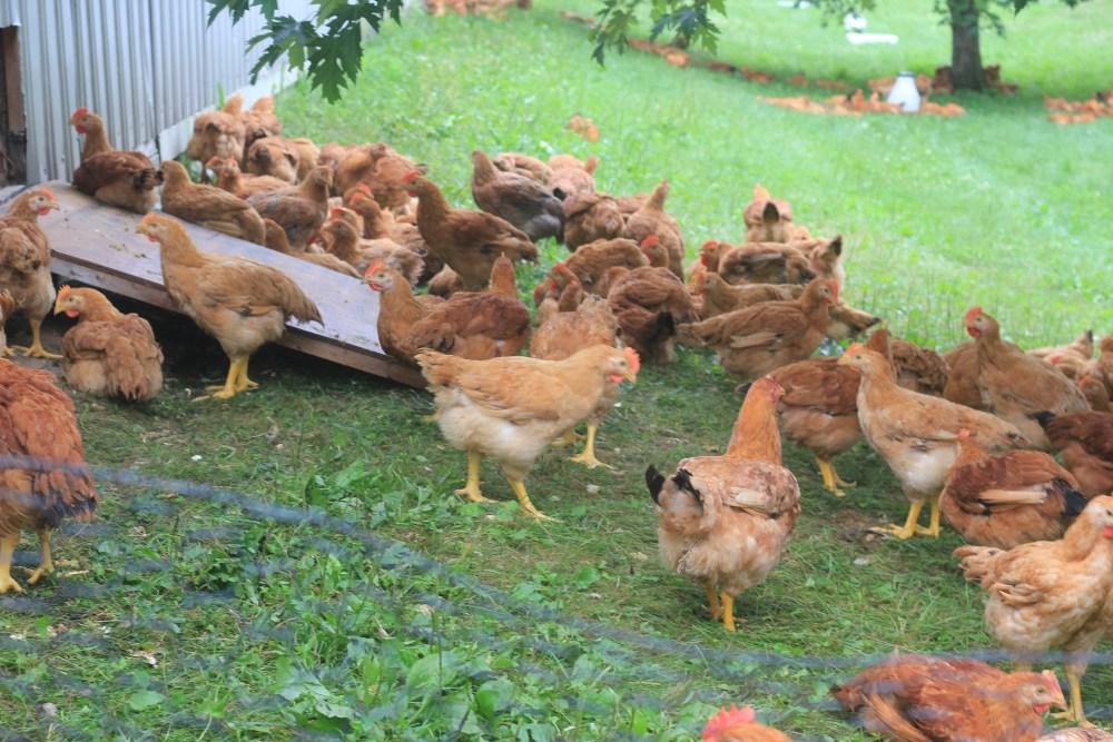 Green Circle Chicken