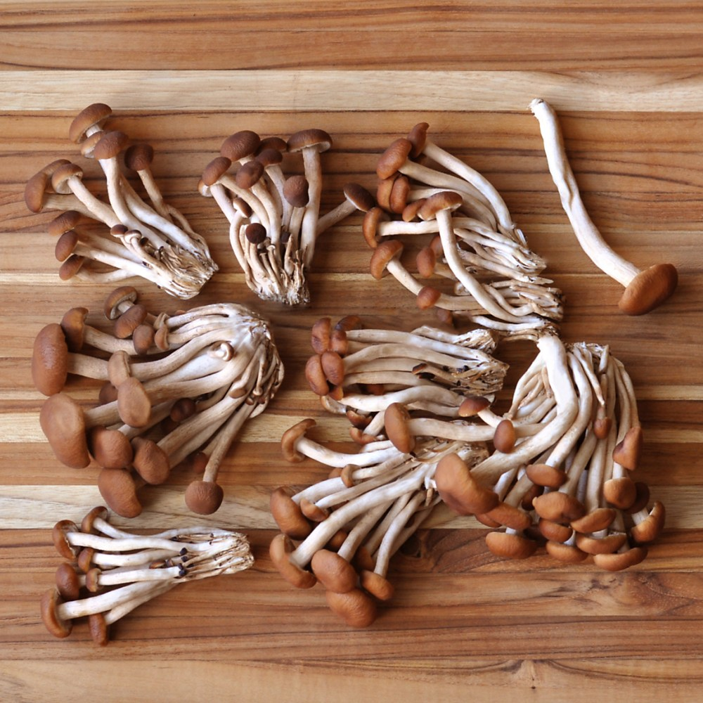 Pioppini mushrooms