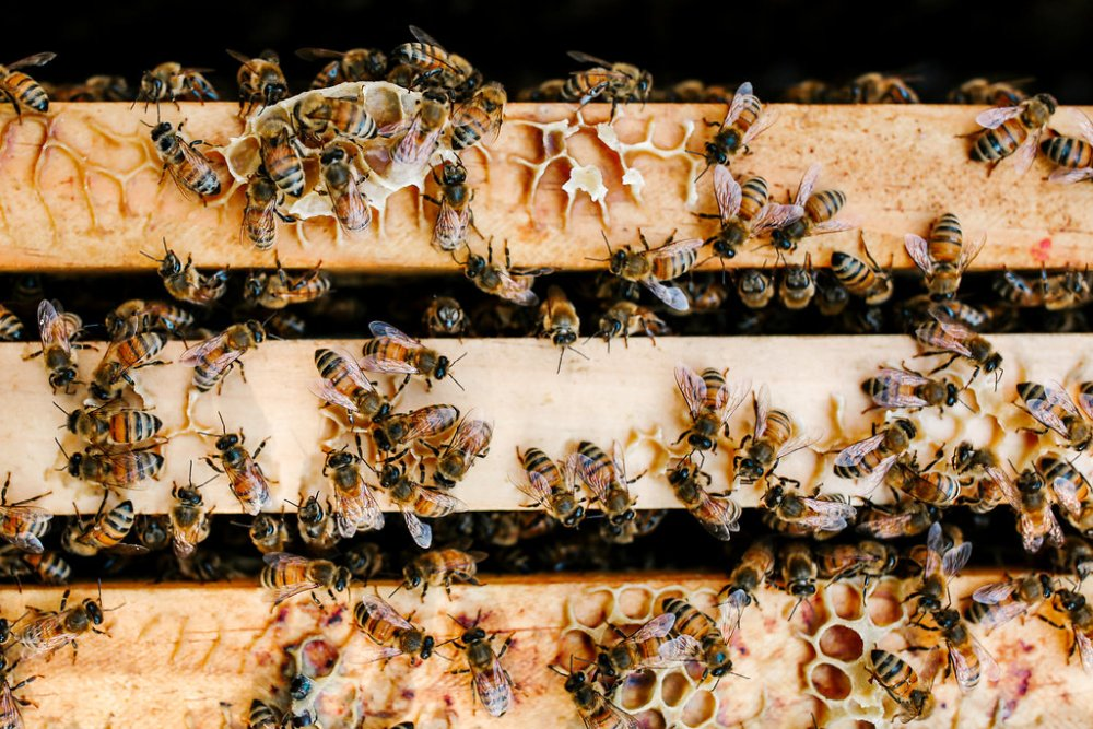 BDP-Farm-Dinner-Bees