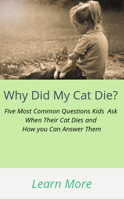 Why Did My Cat Die? Answers to the 5-Top questions that kids ask