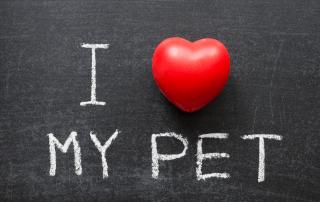 Valentine Celebrations for Pet Loss