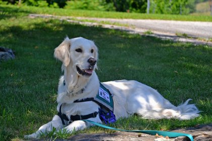 Mourning The Loss Of Your Service Dog