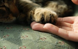 Urgent Coping skills for pet loss grief: A 5-Part e-Course for Immediate Care for Healing Your Heart