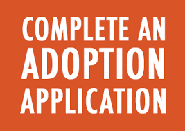 Complete an Adoption Application