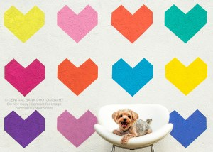 Yorkie dog sitting in a white chair in front of a wall mural of multi-colored hearts for Dallas dog photographer