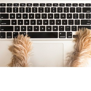 Bentonville Dog Photographer Assistant Freddy With Paws on Keyboard