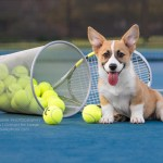 Corey Bevo 2 Frisco S Newest Tennis Star Frisco Dog Photography Central Bark Photography Northwest Arkansas Dog Photographer