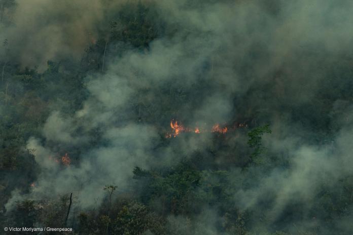 Amazonia pegando fogo 2019