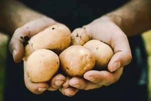 South Holland spuds