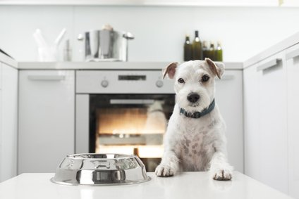 Designing Your Florida Kitchen Remodel With Pets In Mind