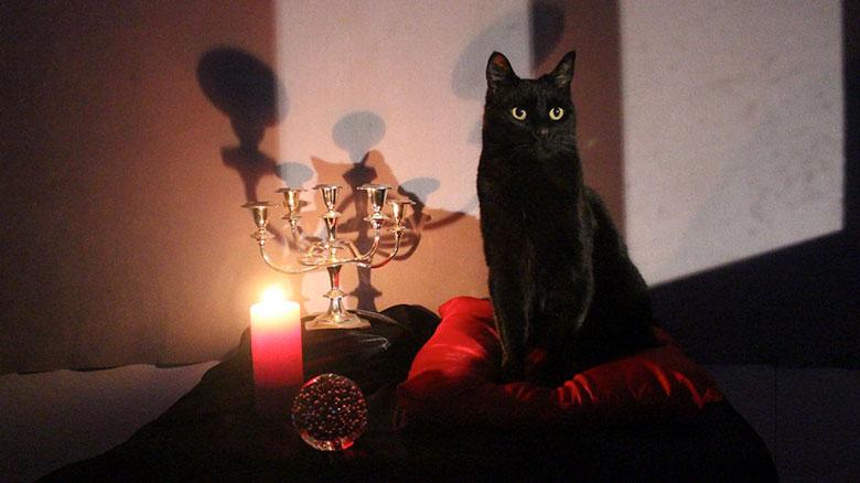 el gato salem en sabrina la bruja adolescente de netflix