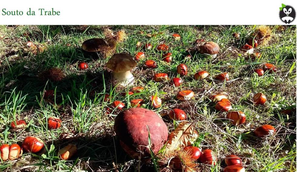 Souto da Trabe campo Mermelada Ecológica Gourmet de Castañas y Higos Souto da Trabe, tarro 265 gr