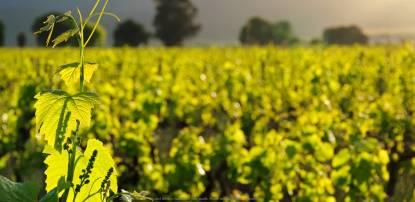 charles de fere viñas
