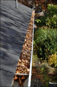 gutter with leaves