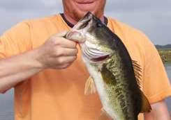 Central Florida Bass Fishing Report