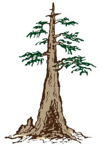 central florida bonsai club logo
