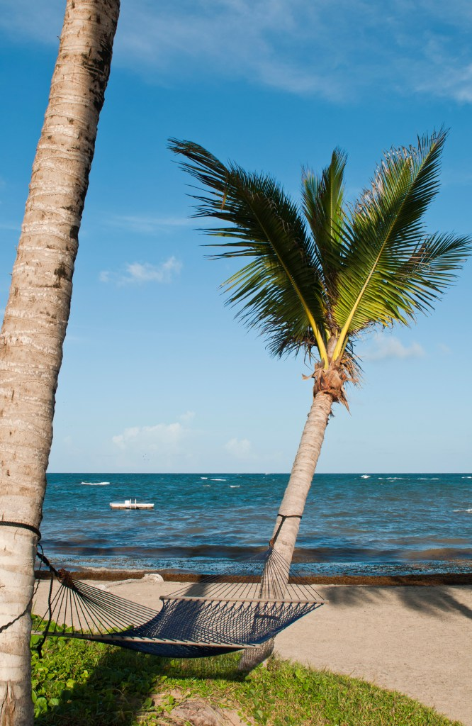 tropical setting with a empty hammock between two palm trees