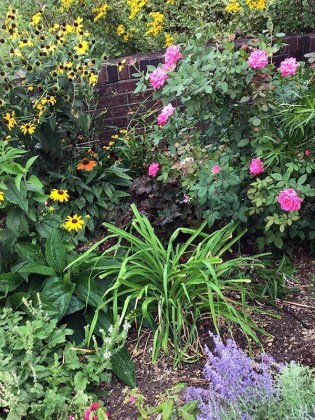 Master Gardeners create award-winning green spaces in Decatur2