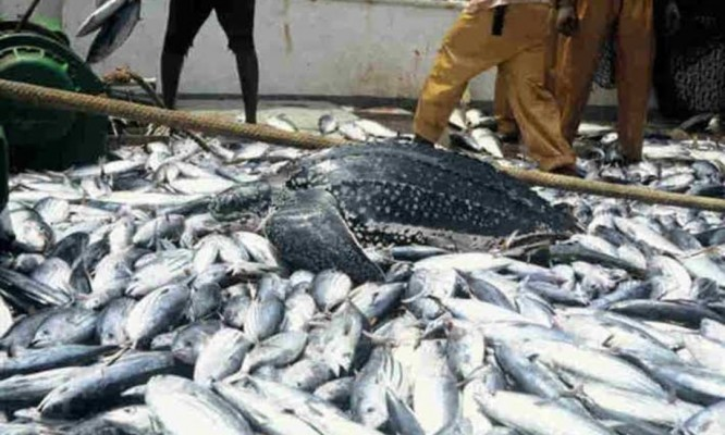 Ban on fish importation - News and Gist Blog in Nigeria