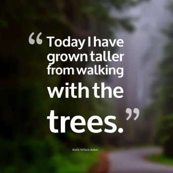 Today I have grown taller from walking with the trees.