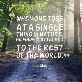 When one tugs at a single thing in nature, he finds it attached to the rest of the world.