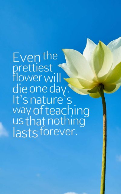 Even the prettiest flower will die one day. It's nature's way of teaching us that nothing lasts forever.