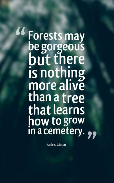 Forests may be gorgeous but there is nothing more alive than a tree that learns how to grow in a cemetery.