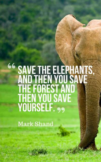 Save the elephants, and then you save the forest - and then you save yourself.
